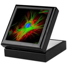 Cell structure Keepsake Box