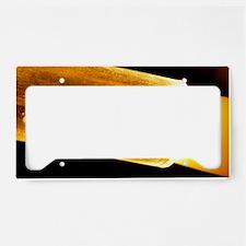 Optical fibre License Plate Holder