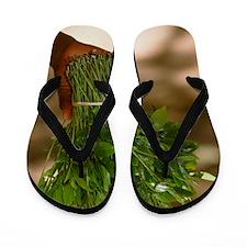 Chat (Catha edulis) Flip Flops
