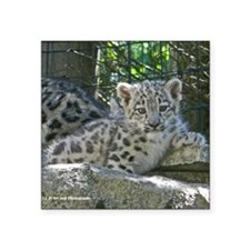 "Snow Leopard Cub Square Sticker 3"" x 3"""