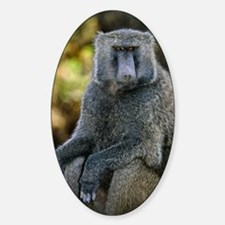 Olive baboon Decal