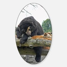 Sleeping Spectacle Bear Decal
