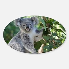 Cute koala  Decal