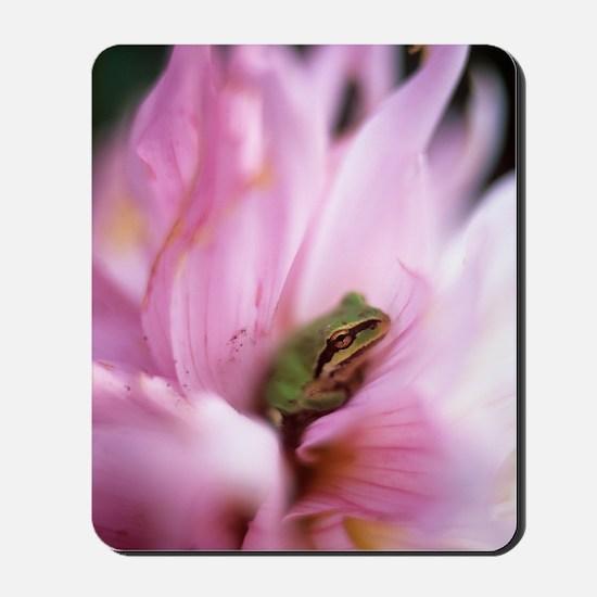 Pacific treefrog on a dahlia flower Mousepad