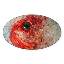 Orange Roughie packed in ice after  Decal