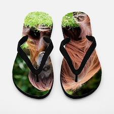 Orang-utan Flip Flops