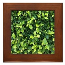 Green Ivy Framed Tile