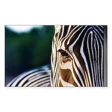 Zebra Eye Decal