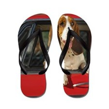 basset hound leaning out the window of  Flip Flops