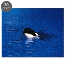Killer whale spy hopping Puzzle