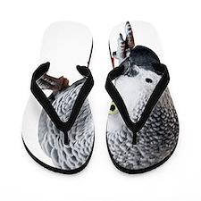 African Grey Parrot Flip Flops
