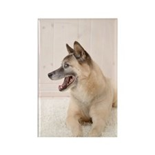 Mix breed dog, Studio Shot Rectangle Magnet