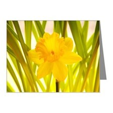 Daffodil flower Note Cards (Pk of 20)