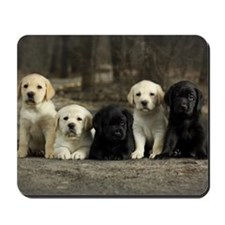 Labrador puppies sitting in the alley. Mousepad