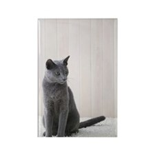 Russian blue cat sitting Rectangle Magnet