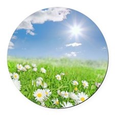 Summer daisies in a meadow Round Car Magnet