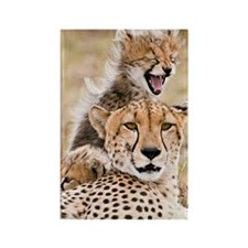 Cheetah and young cubs in forest  Rectangle Magnet