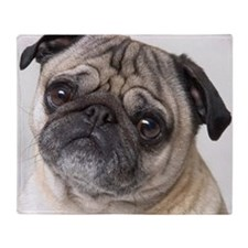 Close up of the face of a pug dog Throw Blanket