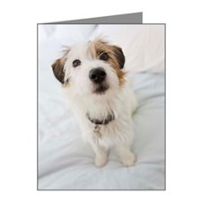 Dog in home and on bed Note Cards (Pk of 10)