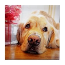 Close-up of wistful Golden Retriever  Tile Coaster