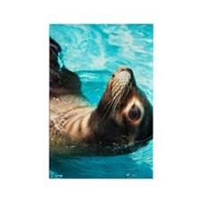 Sea lion in blue water Rectangle Magnet