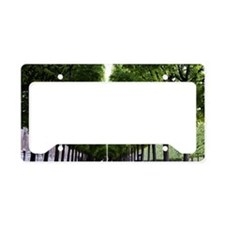 Trees lining the path License Plate Holder