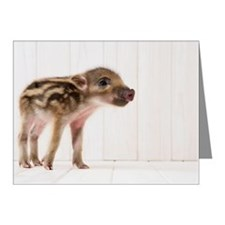 Baby boar standing Note Cards (Pk of 20)