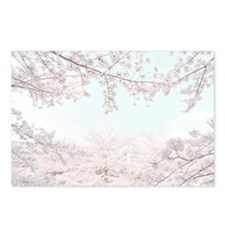 cherry blossoms Postcards (Package of 8)