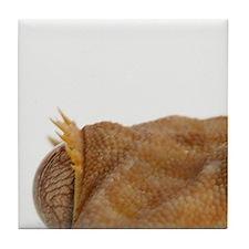 Portrait of crested gecko lizard Tile Coaster