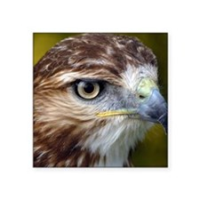 "Red tailed hawk Square Sticker 3"" x 3"""