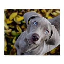 Weimaraner puppy in fall leaves Throw Blanket