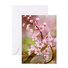Pink Cherry Blossoms HR Greeting Card