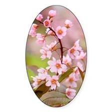 Pink Cherry Blossoms HR Decal