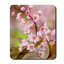 Pink Cherry Blossoms HR Mousepad