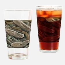 Paramecium sp. protozoa, SEM Drinking Glass
