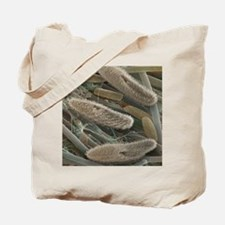 Paramecium sp. protozoa, SEM Tote Bag