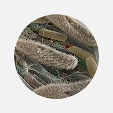 "Paramecium sp. protozoa, SEM 3.5"" Button"
