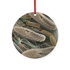 Paramecium sp. protozoa, SEM Round Ornament