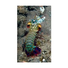 Peacock mantis shrimp Decal
