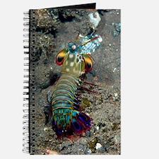 Peacock mantis shrimp Journal
