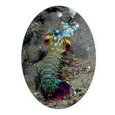 Peacock mantis shrimp Oval Ornament