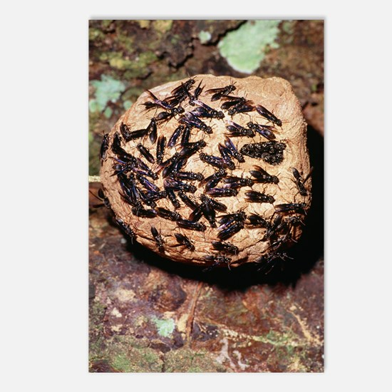 Paper wasps on their nest Postcards (Package of 8)