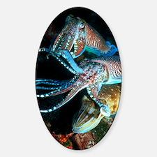 Pharaoh cuttlefish Sticker (Oval)