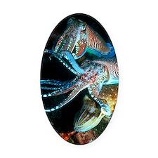 Pharaoh cuttlefish Oval Car Magnet