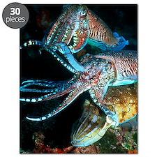 Pharaoh cuttlefish Puzzle