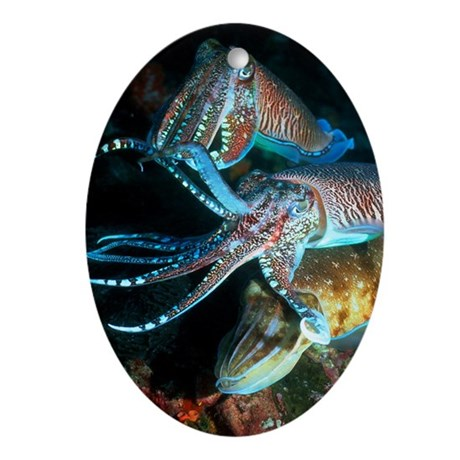 Pharaoh cuttlefish Oval Ornament