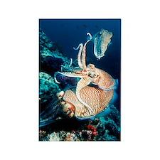 Pharaoh cuttlefish Rectangle Magnet