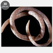 Parasitic nematode worm Puzzle