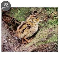 Pheasant chick Puzzle