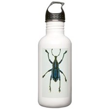 Painted weevil Water Bottle